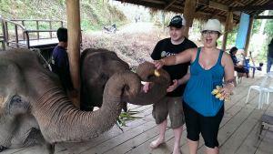 blog3 elephant