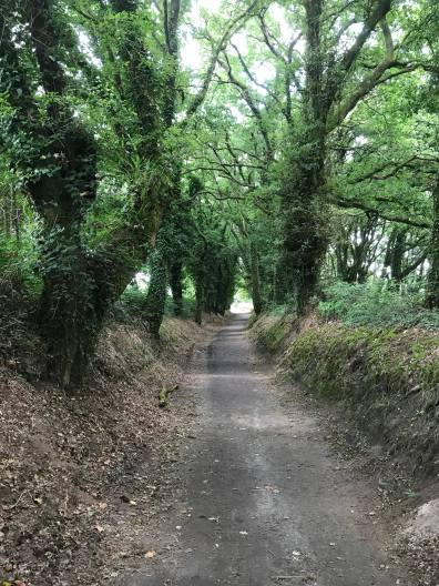 Trail - Blog 5