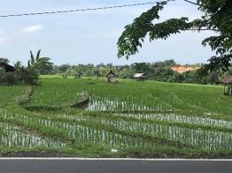 Bali 28