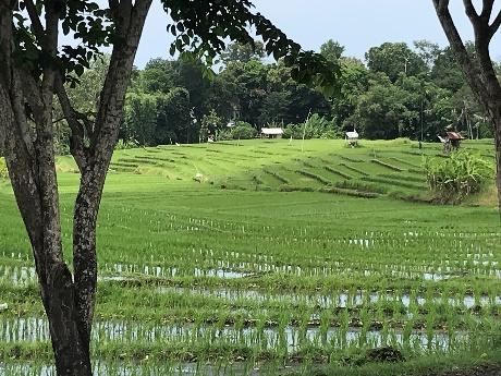 Bali 29