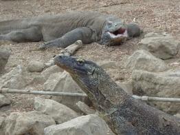 Komodo Island 10
