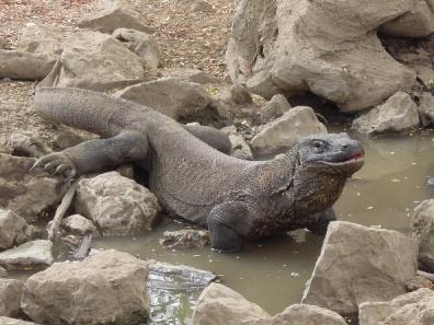 Komodo Island 13
