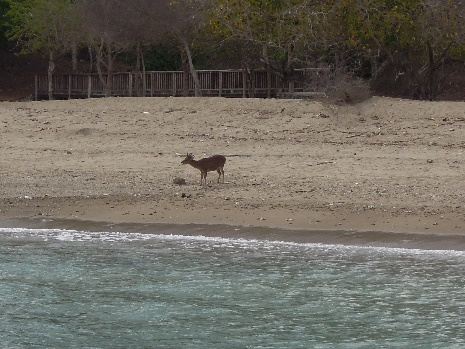 Komodo Island 16