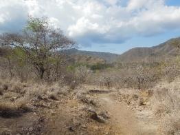 Komodo Island 7